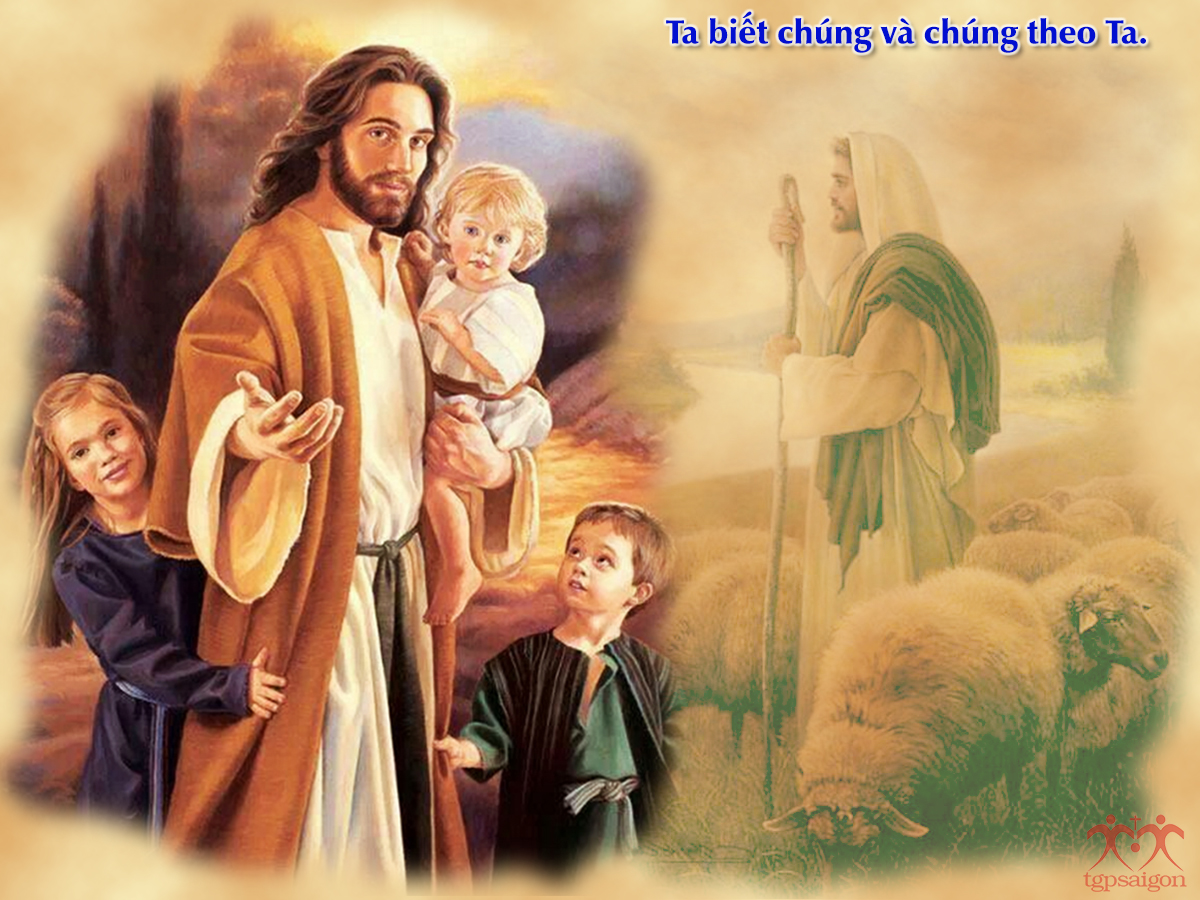 Kinh thánh bằng hình: CN IV PS C. CN Chúa Chiên Lành. Cầu cho ơn thiên triệu